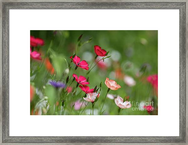 Wildflowers Meadow Framed Print