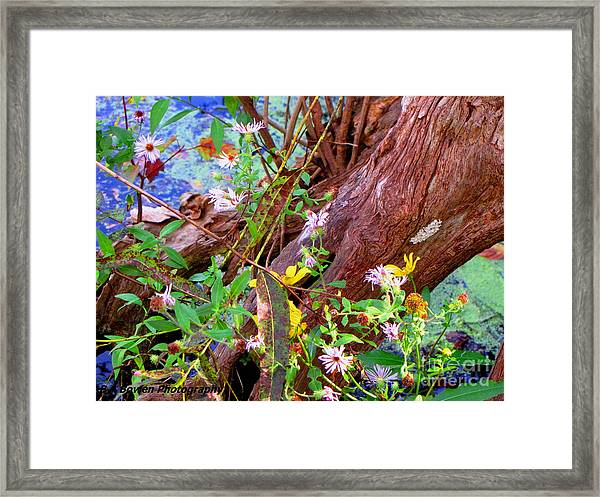 Wildflowers On A Cypress Knee Framed Print