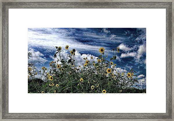 Wildflowers On The Brazos Framed Print