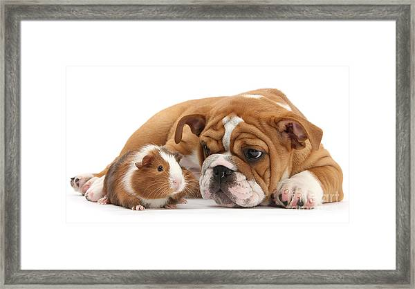 Will You Be My Friend? Framed Print