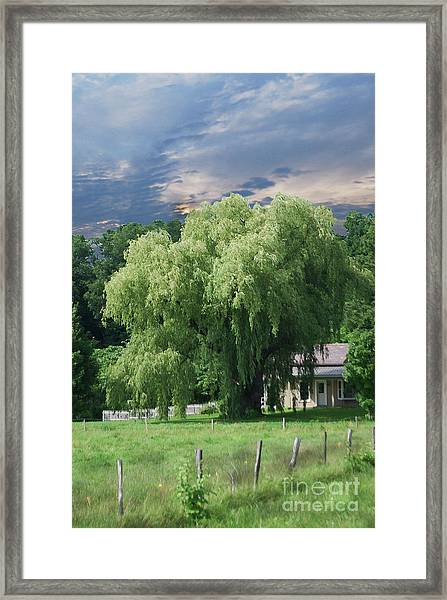 Willow Framed Print by Alan Del Vecchio