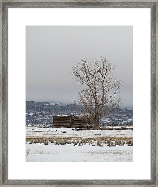 Willow Creek Cabin Framed Print