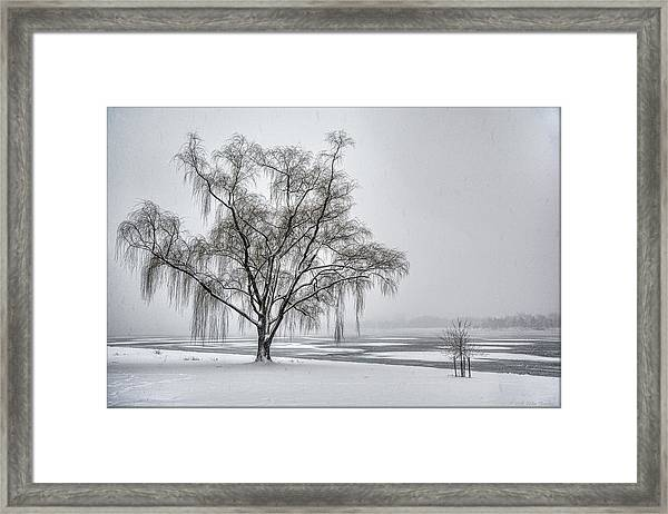 Willow In Blizzard Framed Print