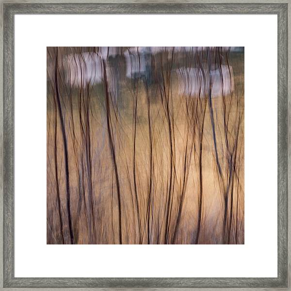 Willows In Winter Framed Print