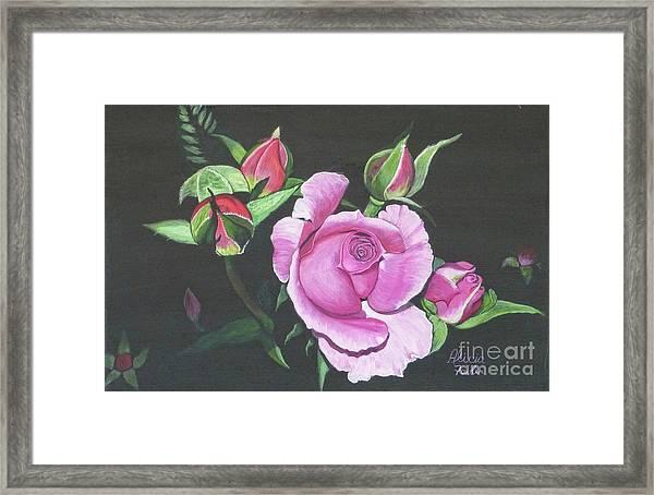 Will's Rose Framed Print