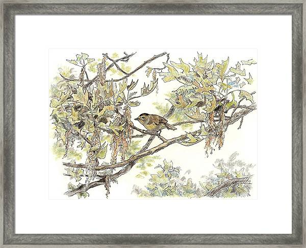 Wilson's Warbler Framed Print