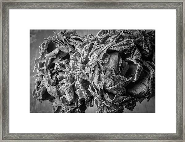 Wilted Peonies Framed Print
