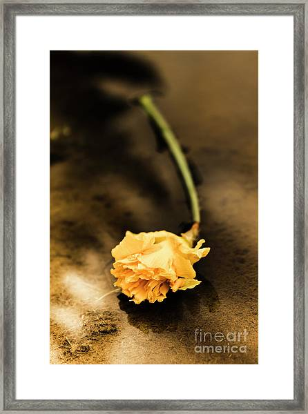 Wilting Puddle Flower Framed Print