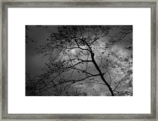 Wind And Rain Are On The Way Framed Print