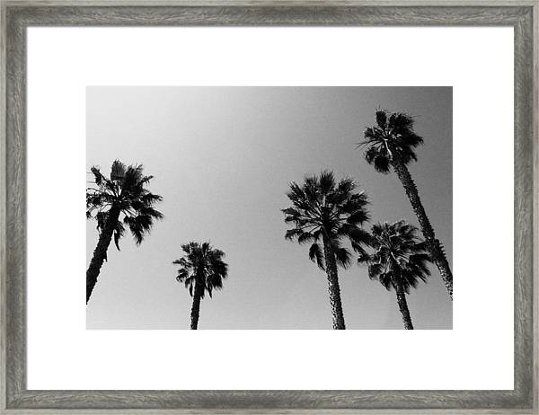 Wind In The Palms- By Linda Woods Framed Print