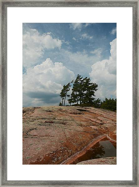 Wind Swept Trees On Rocks Framed Print