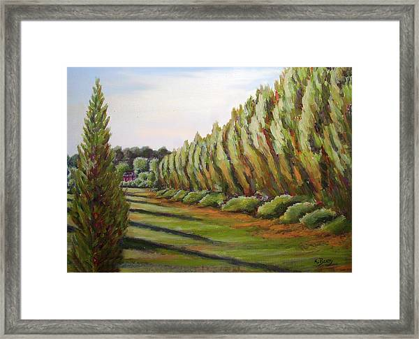 Windbreak Evening Framed Print