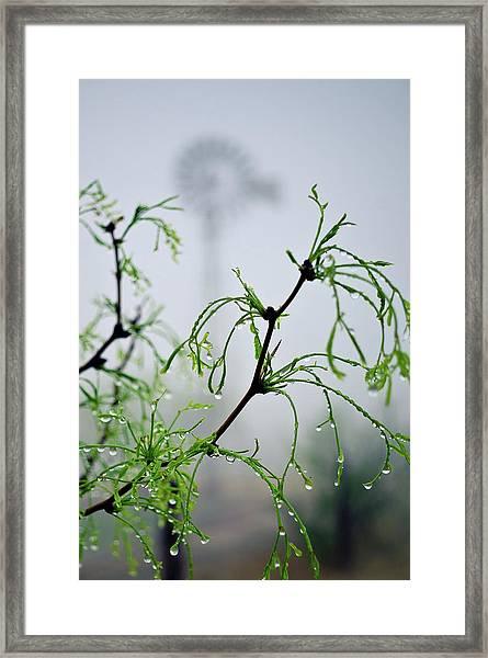 Windmill In The Mist Framed Print