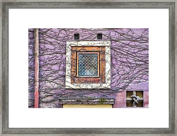 Window And Vines - Prague Framed Print