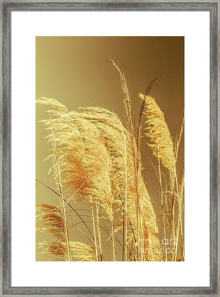 Windswept Autumn Brush Grass Framed Print