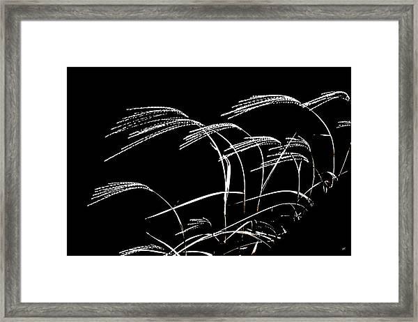 Windswept Grasses Framed Print