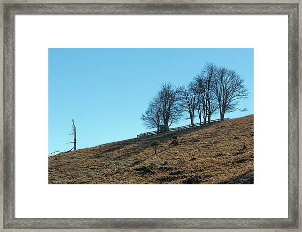 Framed Print featuring the photograph Windswept Trees - December 7 2016 by D K Wall
