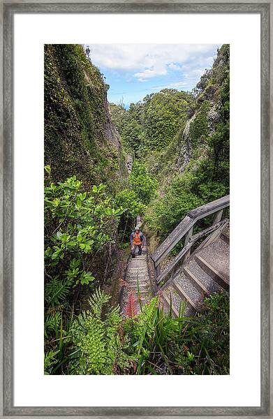 Windy Canyon Great Barrier Island New Zealand Framed Print