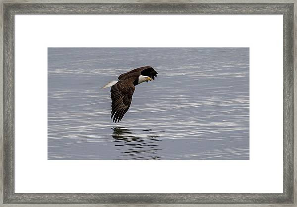 Wing To Water Framed Print