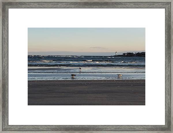 Wingaersheek Beach Seagulls At Sunrise Framed Print
