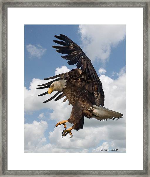Wings Beak And Talons Framed Print