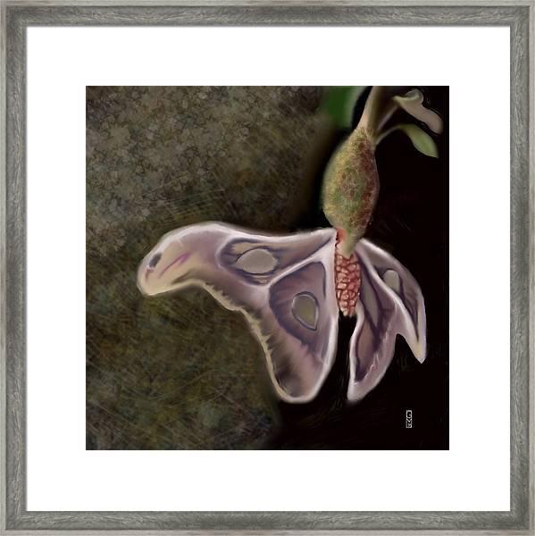 Wings I Framed Print
