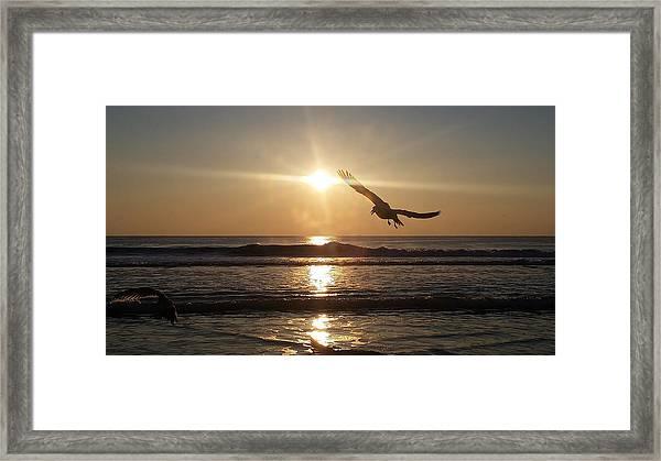 Wings Of Sunrise Framed Print
