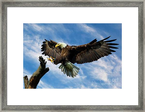 Wings Outstretched Framed Print