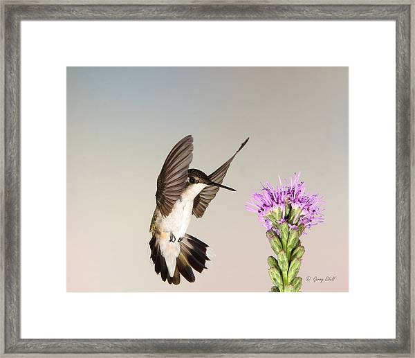 Wings Up Framed Print