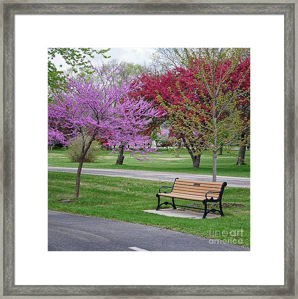 Framed Print featuring the photograph Winona Mn Bench With Flowering Tree By Yearous by Kari Yearous