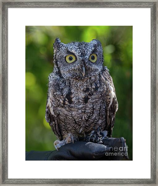 Winston Wildlife Art By Kaylyn Franks Framed Print