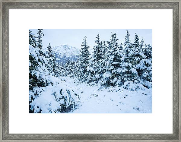 Winter Arrives Framed Print