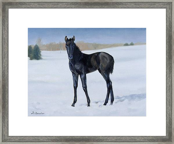 Winter Baby Framed Print