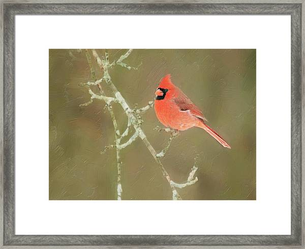 Winter Cardinal Framed Print