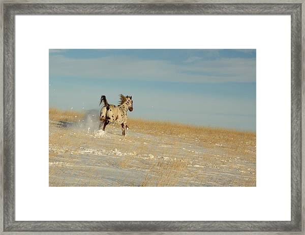 Winter Charger Framed Print
