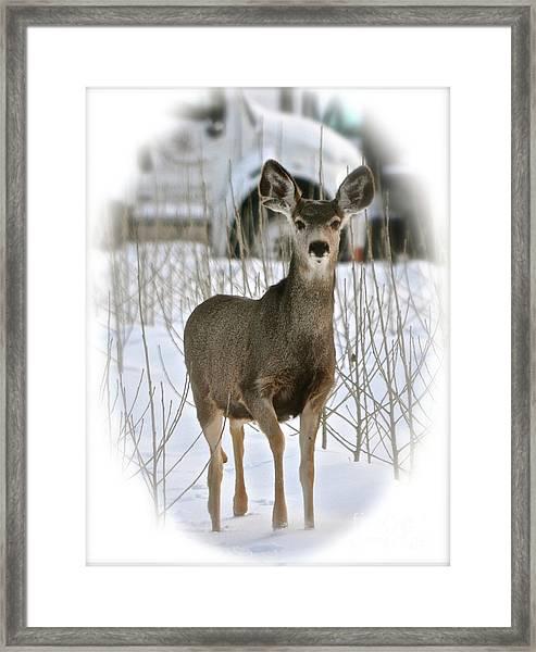 Winter Deer On The Tree Farm Framed Print