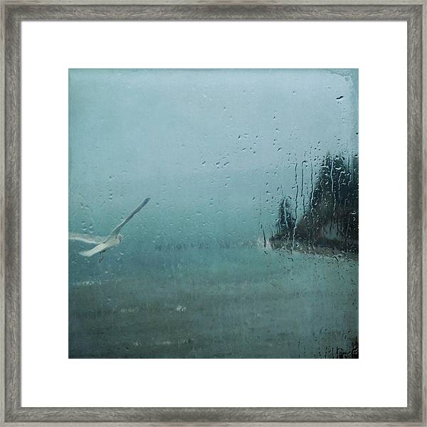 Winter Flight Framed Print