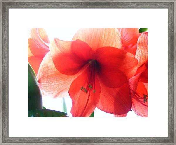 Winter Flower Framed Print