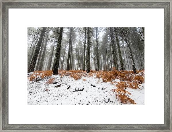 Winter Forest Landscape Framed Print