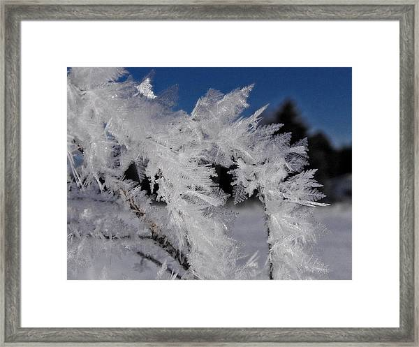 Winter Frost 6 Framed Print