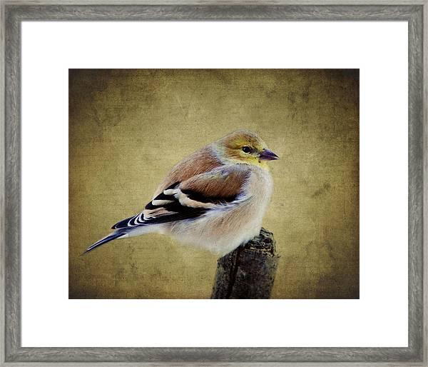 Winter Goldfinch Framed Print