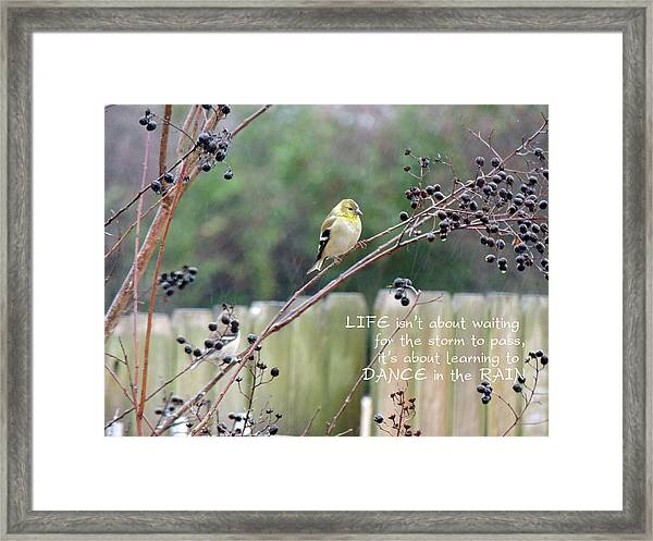 Winter Goldfinch In The Rain With Quotation Framed Print