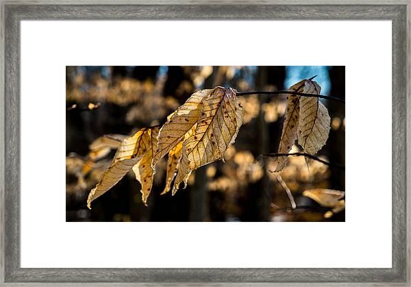 Winter Leaves Left Framed Print