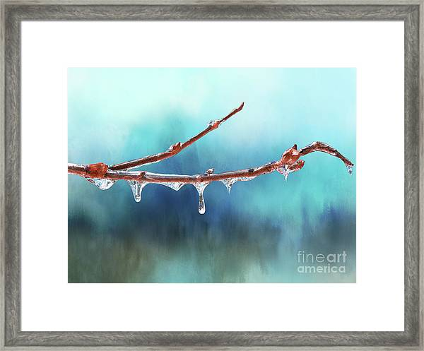 Winter Magic - Gleaming Ice On Viburnum Branches Framed Print