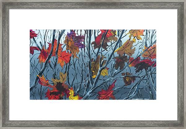 Winter Maple Framed Print
