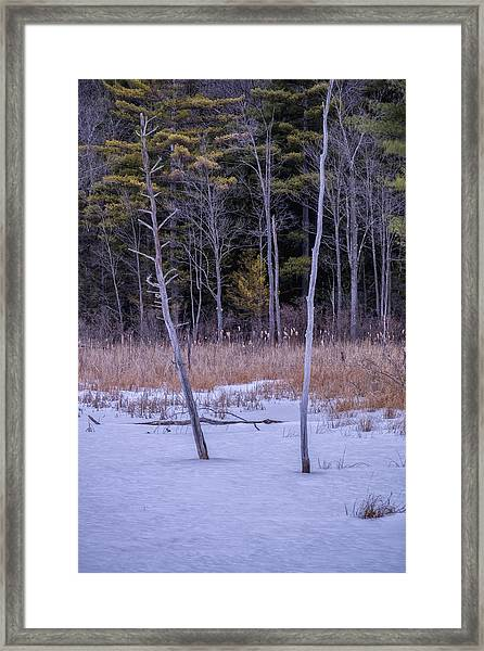 Winter Marsh And Trees Framed Print
