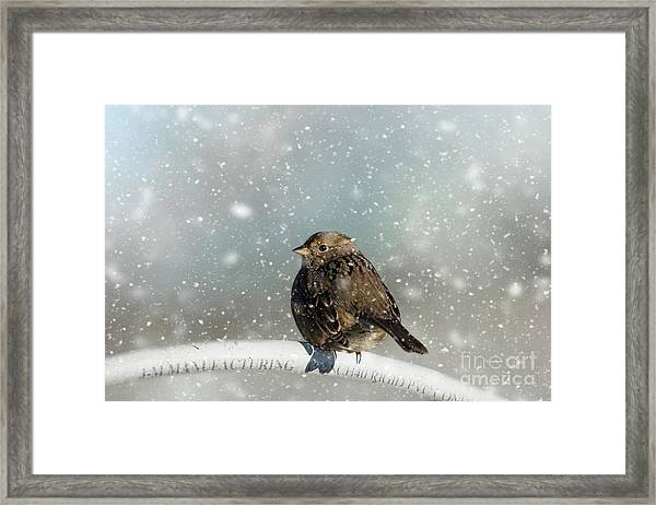 Winter Morning Framed Print