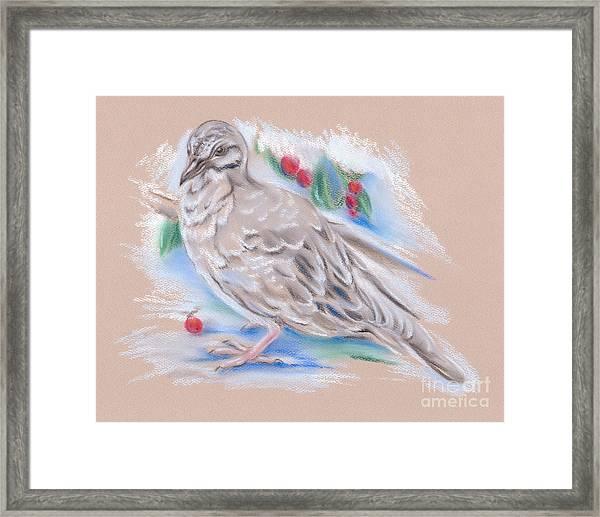 Winter Mourning Dove Framed Print