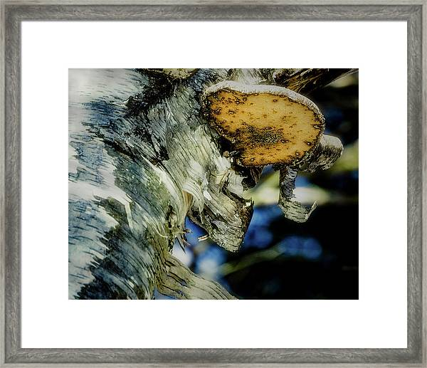 Winter Mushroom Framed Print