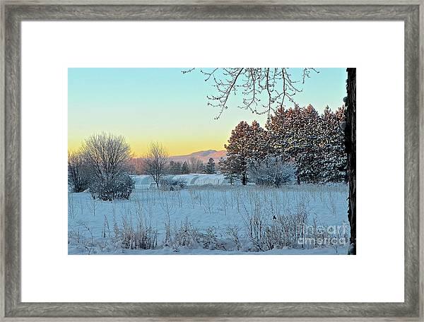 Winter On The Tree Farm Framed Print